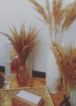 Сухоцвети, тростник, пампасная трава, фотосесия, пушистики для декора