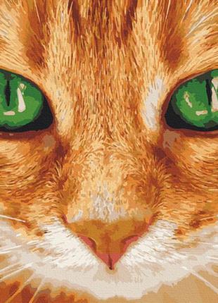 Картина по номерам 40*50 кот