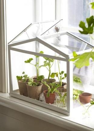 Теплица для растений
