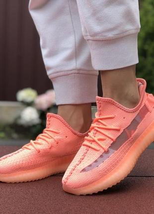 Женские кроссовки adidas yeezy boost 350 (коралловые) #адидас