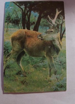 Календарь карманный календарик советский ссср срср олень природа
