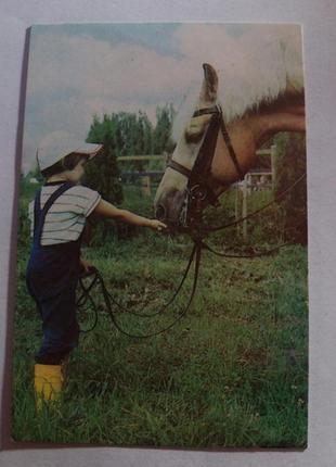 Календарь карманный календарик советский ссср срср лошадь конь