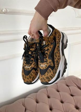 Ash leopard 🔥 стильные женские кроссовки 👟36-40 р