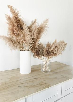 Камыш пампасная трава сухоцвет