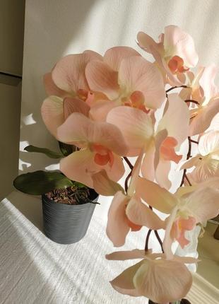 Орхідея,2 шт