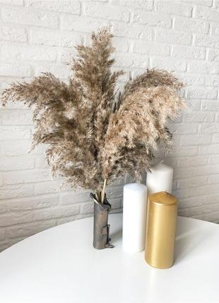 Камыш пампасная трава сухоцвет метёлка