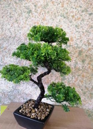 Дерево бонсай.