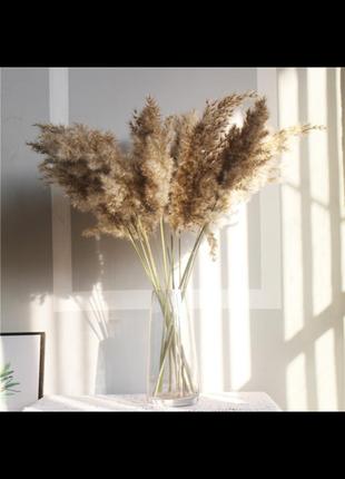 Пампасная трава камыш тросниковый сухоцвет для декора для предметной фотосьемки
