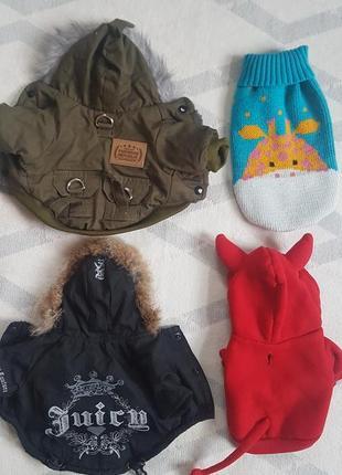 Набор вещей для маленькой собачки