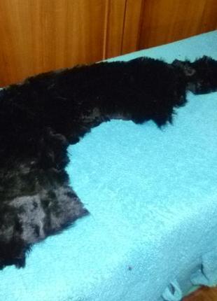 Мех морского котика или кролика полированный черный натуральный для рукоделия