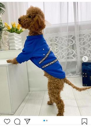 Толстовка для собак и котов в расцветках