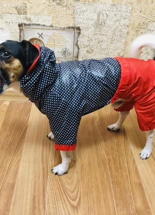 Дождевик для собак горошек мелкий