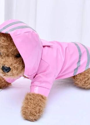 Одежда для собак и котов