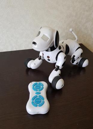Робот-собака robotdog
