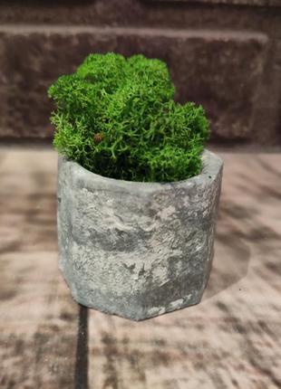 Бетонное кашпо со стабилизированным мхом ягель норвегия яркого зеленого цвета.