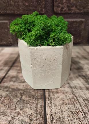 Кашпо из бетона. бетонный горшок с со стабилизированным мхом ягель