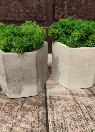 Набор из 2 кашпо кашпо из бетона. бетонный горшок с со стабилизированным мхом ягель