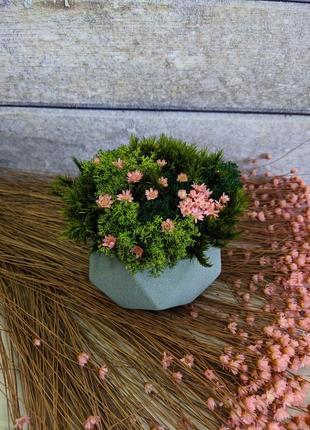 Стабилизированный мох с сухоцветами