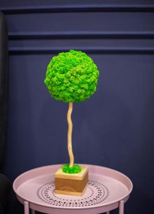 Еко-декор  топіарій з стабілізованим мохом