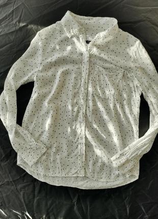 Блузка рубашка mango в лапку xs