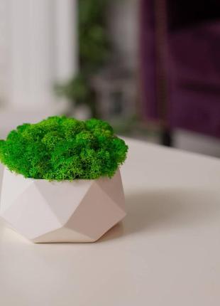 Кашпо із стабілізованим мохом5 фото