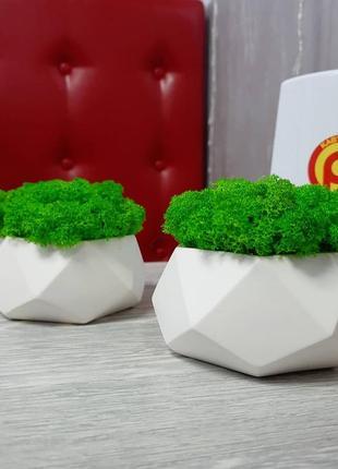 Кашпо із стабілізованим мохом2 фото
