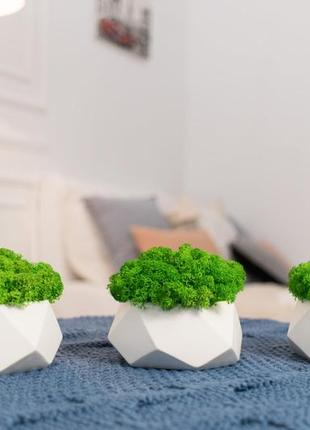Кашпо із стабілізованим мохом6 фото
