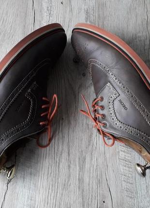 Туфлі броги geox