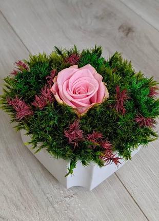 Букет из стабилизированной розы и мха