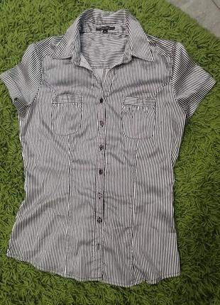 Блуза 46 amisu