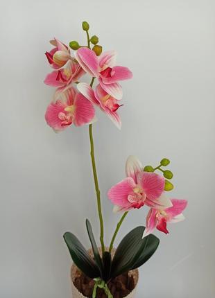 Латексна орхідейка ручної роботи