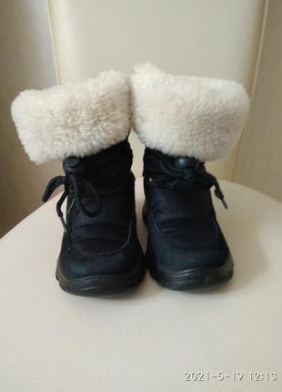 Primiji naturino, чобітки