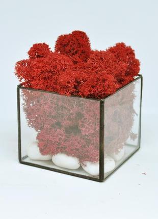 Стеклянный флорариум кашпо моссариум куб со стабилизированным мхом красный 7 см /декор для дома