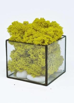 Стеклянный флорариум кашпо куб со стабилизированным мхом желтый 7 см/декор для дома/композция из мха