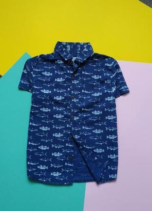 Рубашка с принтом акула