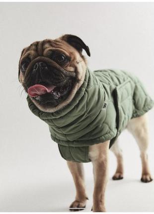 Одежда / куртка для собак
