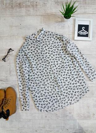 Стильна сорочка бойфренд з принтом у зебри  та з подовженною спинкою від h&m.