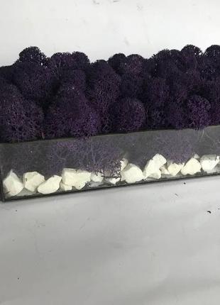 Флорариум кашпо с стабилизированным мхом.стеклянный флорариум с фиолетовым мхом