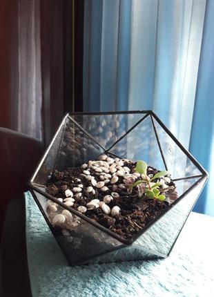 Стильный вазон флорариум ваза декор горшок для суккулентов