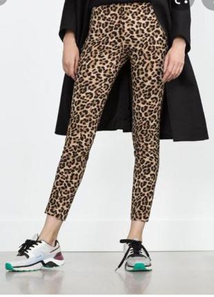 Леопардовые штаны zara  basic