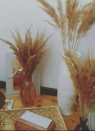 Тростник пампасная трава декор