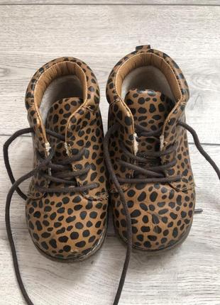 Ботиночки hm, черевички hm 23 p., леопардовие ботинки