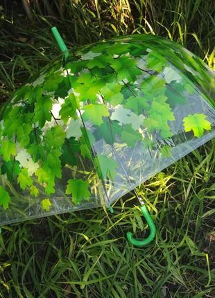 Зонтик-трость зеленые листья
