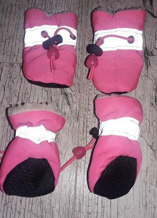 Стильные сапожки, тапочки, пинеточки для маленькой собачки - девочки.