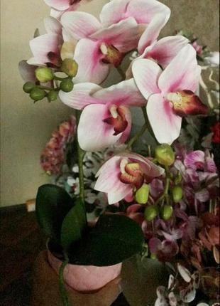 Орхидея в горшке 2