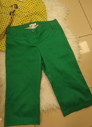 Зеленые шорты бриджи