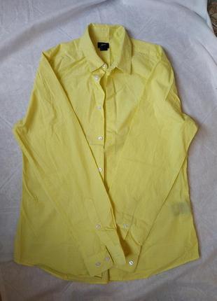 Котонова рубашка трендовго кольору