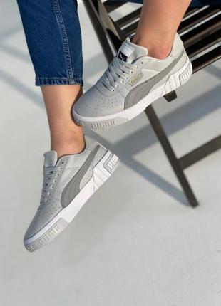 Puma cali grey