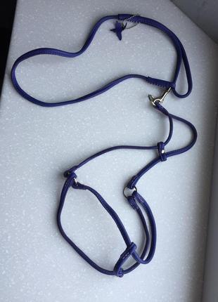 Ошейник и поводок collar