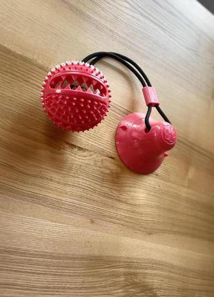 Iграшка-зубна щiтка для собак. м'ячик
